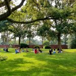 People doing yoga in sitting pose on grass under trees