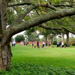 Large shady tree with people doing yoga in the background